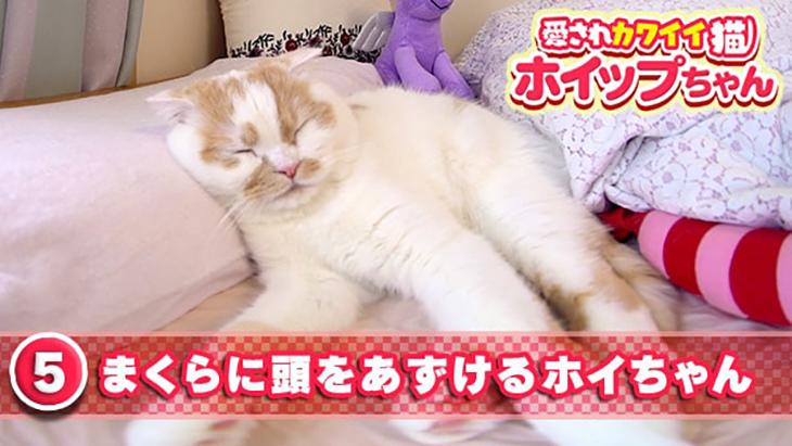 #5 まくらに頭をあずけるホイちゃん / 愛されカワイイ猫 ホイップちゃん