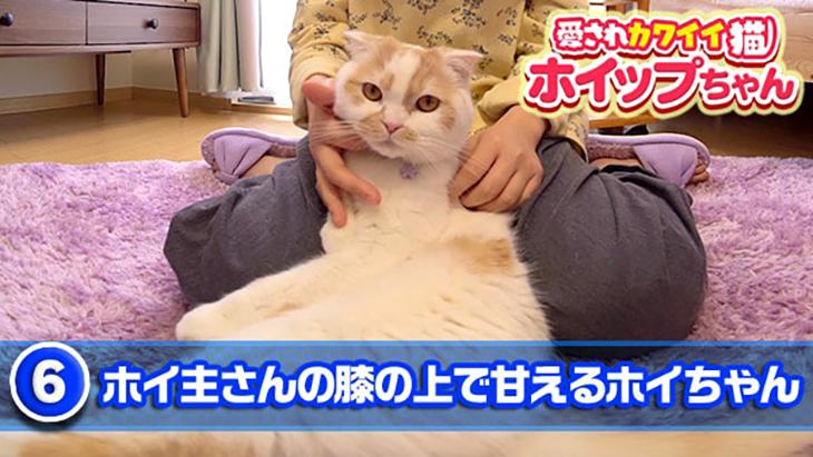 #6 ホイ主さんの膝の上で甘えるホイちゃん / 愛されカワイイ猫 ホイップちゃん