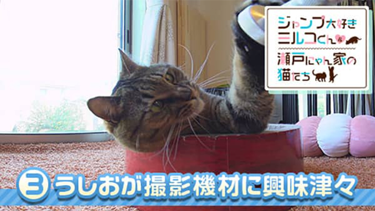 VR動画:#3 うしおが撮影機材に興味津々 / ミルコくん&瀬戸にゃん家