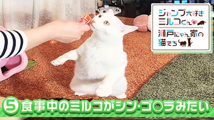 VR動画:#5 食事中のミルコがシン・ゴ○ラみたい / ミルコくん&瀬戸にゃん家