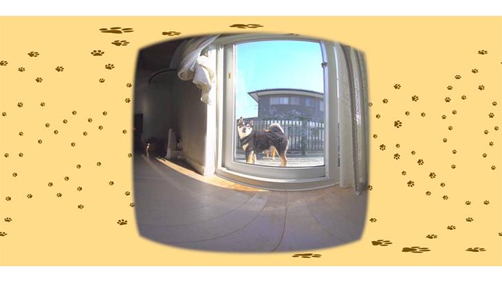 #7 上手に窓を開けて仲良く入室 / 3匹の柴犬ひなあおそら:2枚目