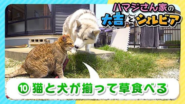 VR動画:#10 猫と犬が揃って草食べる / 大吉とシルビア