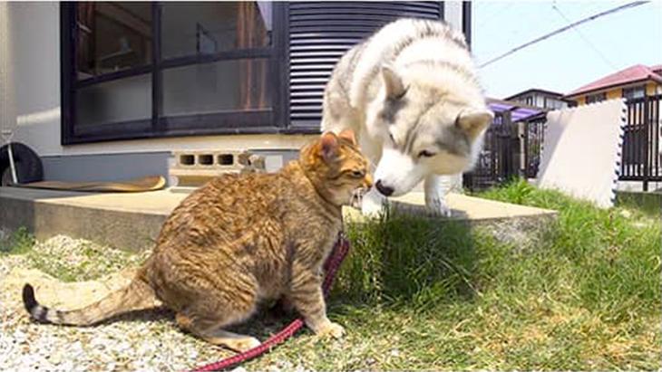 #10 猫と犬が揃って草食べる / 大吉とシルビア:1枚目