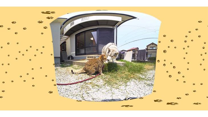 #10 猫と犬が揃って草食べる / 大吉とシルビア:2枚目
