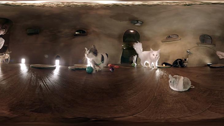【猫カフェ】てまりのおうち④オモチャにつられて続々と・・・:2枚目