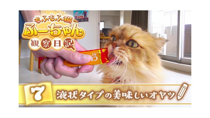 #7 液状タイプの美味しいオヤツ / もふもふ猫ふーちゃん