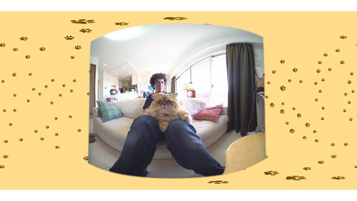 #8 飼い主さんのお膝に鎮座 / もふもふ猫ふーちゃん:2枚目