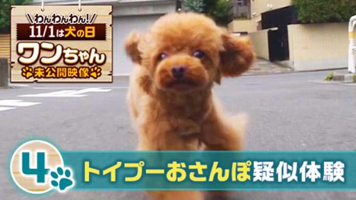#4 トイプーおさんぽ疑似体験 / ワンちゃん未公開映像