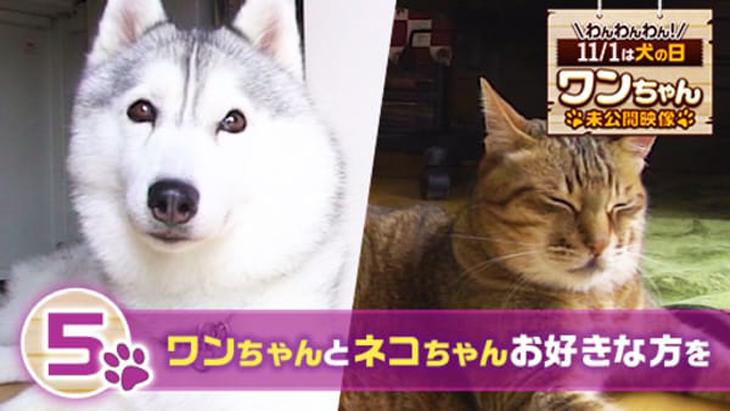VR動画:#5 ワンちゃんとネコちゃんお好きな方を / ワンちゃん未公開映像