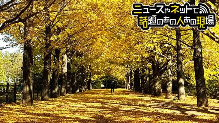 金色のトンネル イチョウ並木(Gingko Trees in Tokyo)