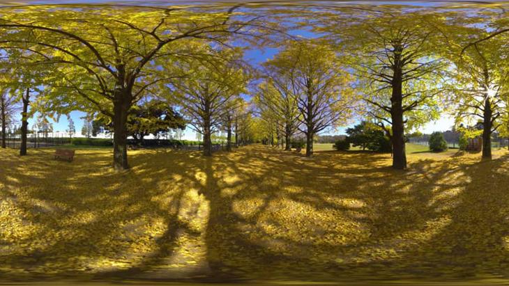 金色のトンネル イチョウ並木(Gingko Trees in Tokyo):1枚目