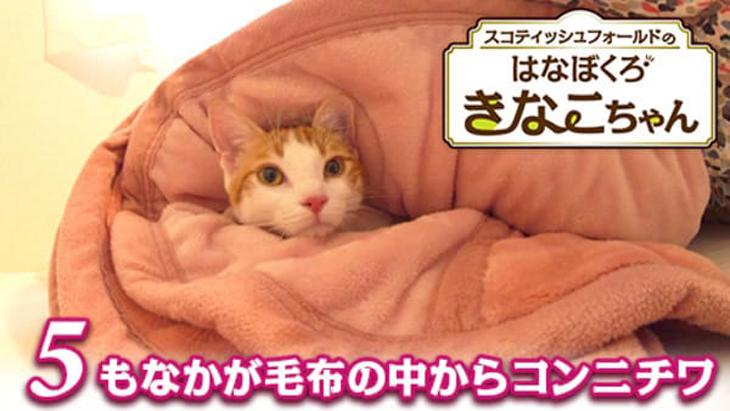#5 もなかが毛布の中からコンニチワ / はなぼくろきなこちゃん