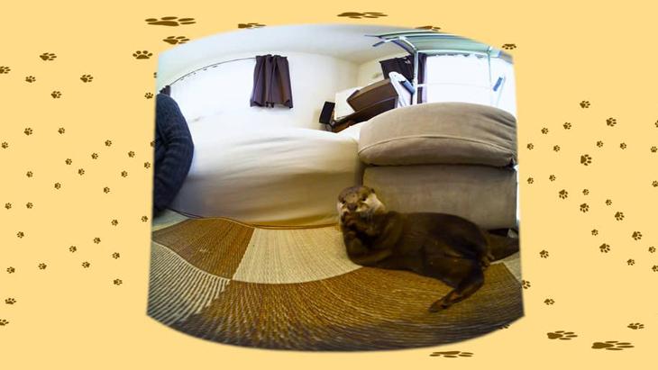 #8 寝転がるさくらを色んな角度から / コツメカワウソのさくらちゃん:1枚目