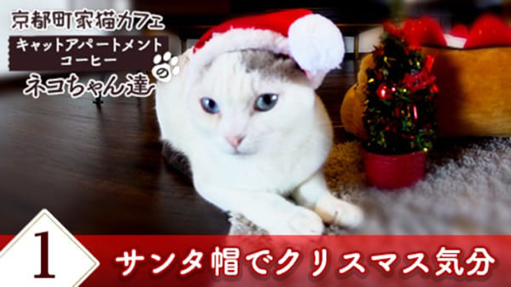 #1 サンタ帽でクリスマス気分 / 京都町家猫カフェ キャットアパートメントコーヒー