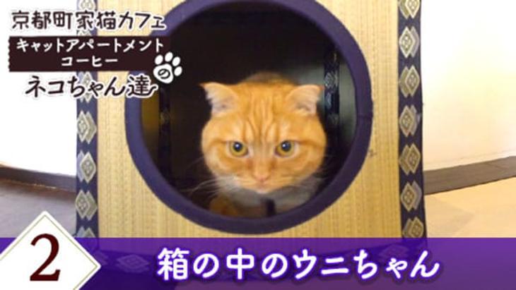 #2 箱の中のウニちゃん / 京都町家猫カフェ キャットアパートメントコーヒー