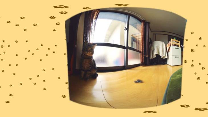 #15 猫ズとハンドスピナー / ハマジさん家の大吉とシルビア:1枚目