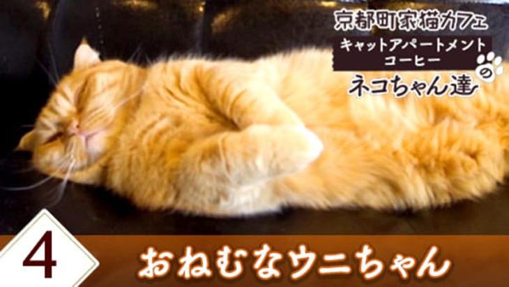 VR動画:#4 おねむなウニちゃん / 京都町家猫カフェ キャットアパートメントコーヒー