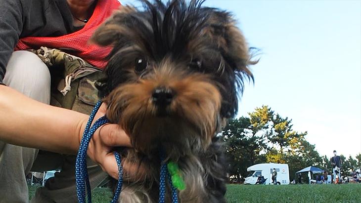 松本秀樹のVR犬図鑑!小型犬パピー編(ヨークシャー・テリア、ポメラニアン、シー・ズー、トイ・プードル):4枚目