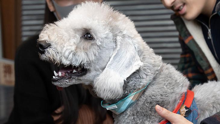 松本秀樹のVR犬図鑑!中型犬パピー編(甲斐犬、ベドリントン・テリア、ウィペット、ウェルシュ・コーギー・ペンブローグ):5枚目